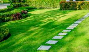 Why Hire An Aeration, Weed & Overseed Lawn Service In Arlington?