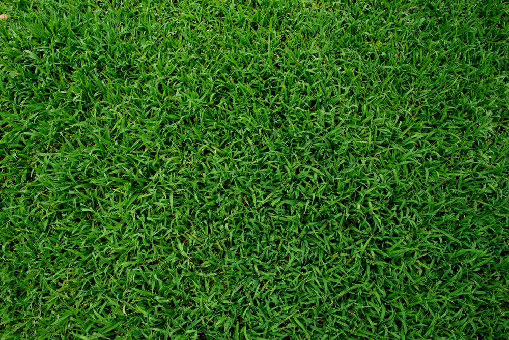 Hire A Skilled Aeration, Weed & Overseed Lawn Service In Seattle
