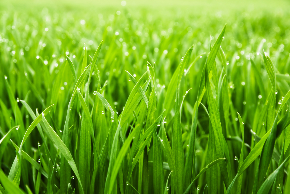 Achieve Lush Landscape Results With Aeration, Weed & Overseed Lawn Service In Monroe
